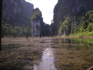 Veest sirutuvad uppunud puud